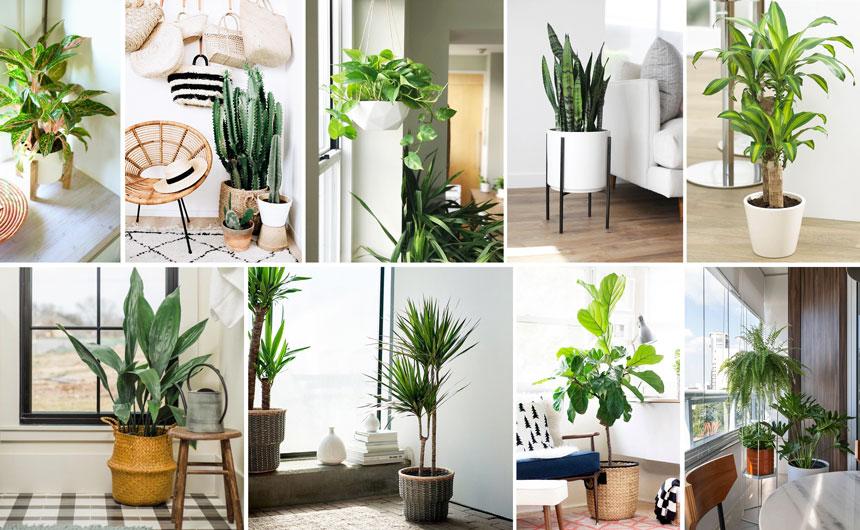 (1. Anglaonema, 2. cactus, 3. potos, 4. sansevieria, 5. tronco de Brasil, 6. aspidistra, 7. dracena, 8. ficus, 9. helechos …)