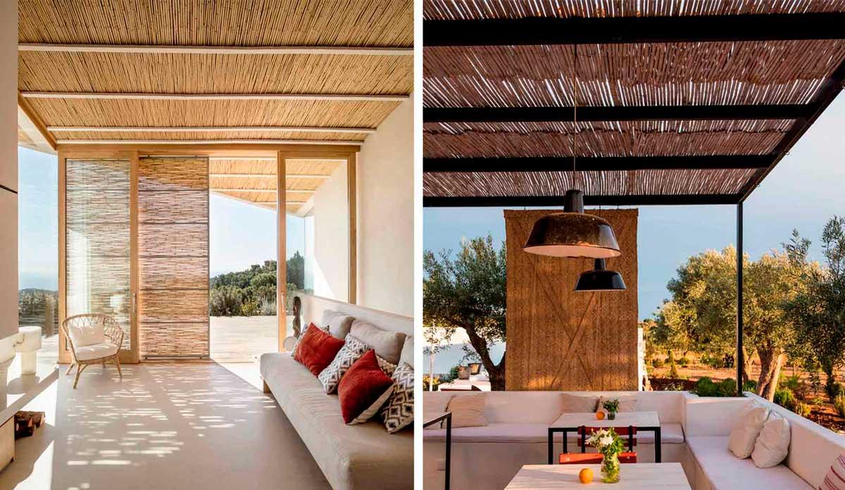 Ejemplos de bambú para exterior